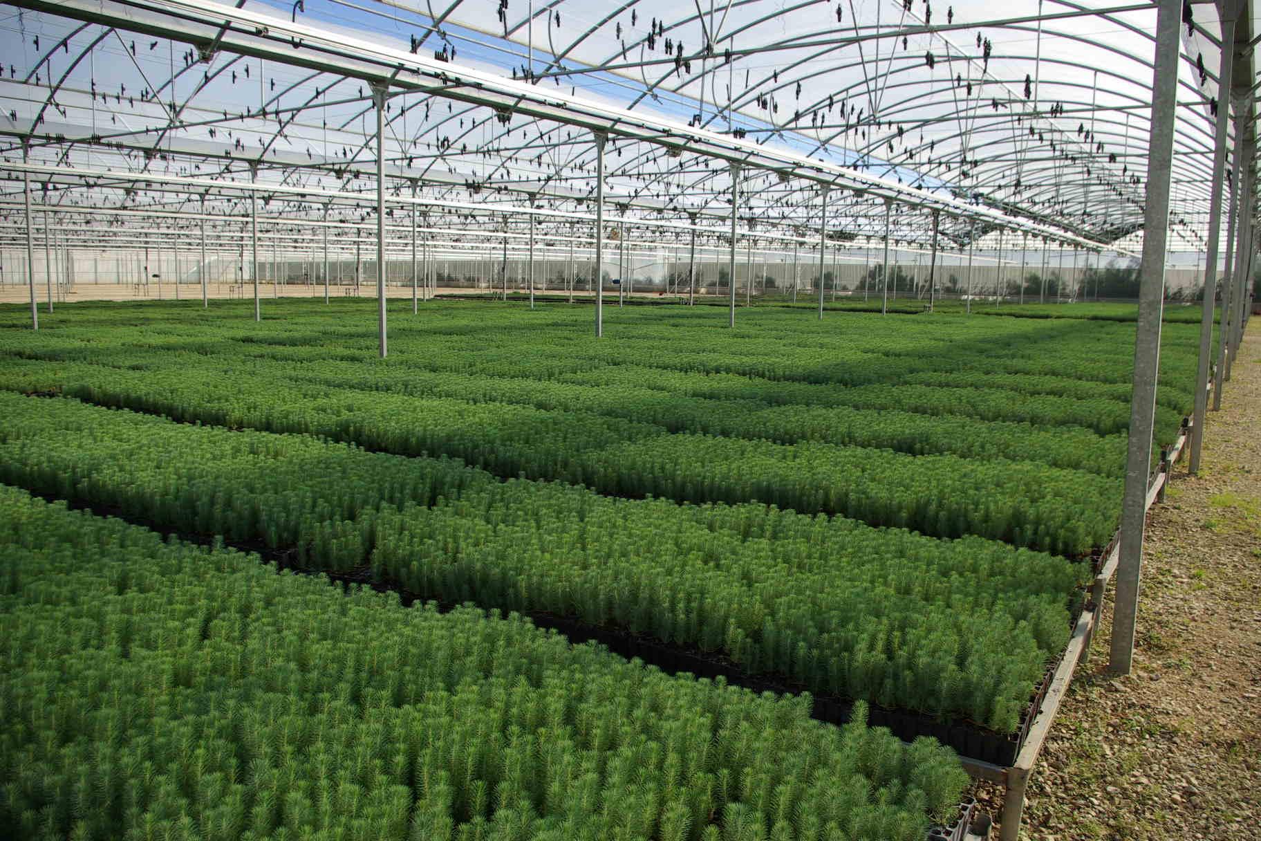 Vivero forestal en el que trabaja id forest for Proyecto productivo de vivero forestal