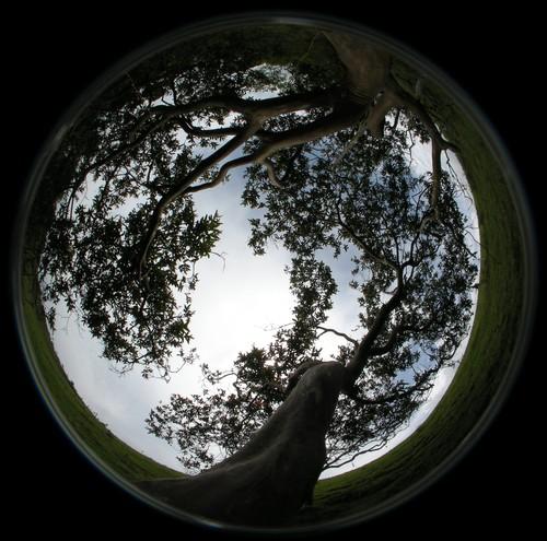 Fotografía hemisférica de uno de los guayabos estudiados.