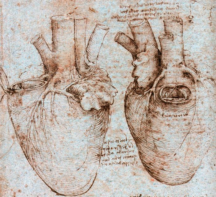Leonardo da Vinci estudió anatomía cuando era joven. Sus dibujos ...