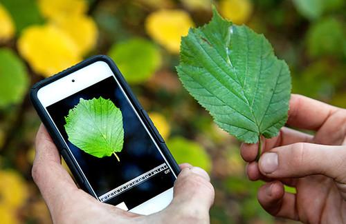 Plagapp, herramienta para reconocer plagas en cultivos/UN
