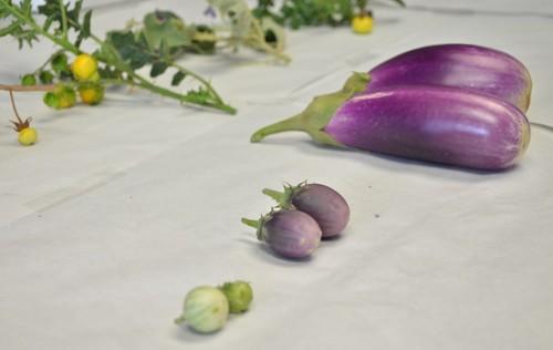 Productos hortícolas. Foto: UPV.