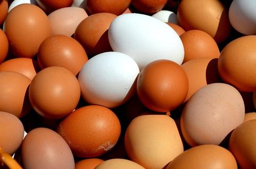 Huevos. Foto: UGR.