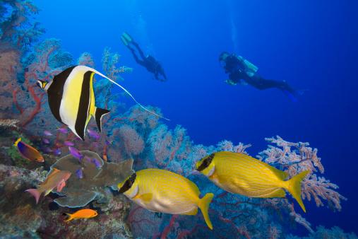 Peces en los arrecifes de baja california foto cicese - Descargar fondo de pantalla en movimiento gratis ...