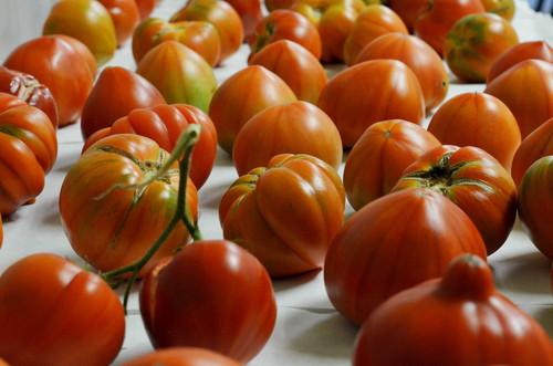 Tomates. Foto: UPV.