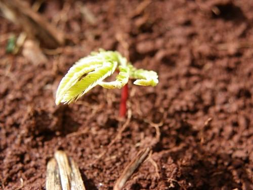 Reforestación/Leticia Garcia