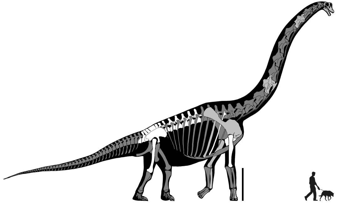 Estudian un dinosaurio de cuello extremadamente largo custodiado en ...